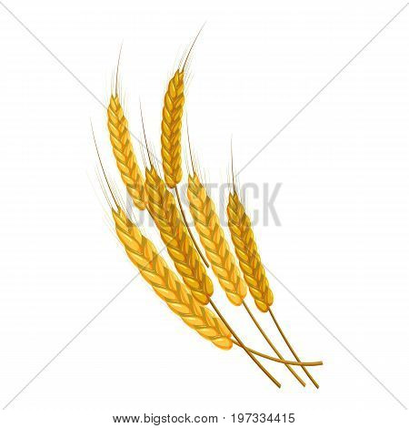Gold ripe wheat ears icon. Cartoon illustration of wheat ears vector icon for web design