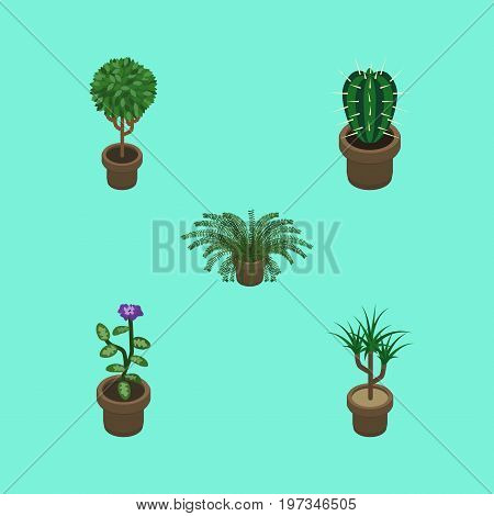 Isometric Houseplant Set Of Plant, Peyote, Houseplant And Other Vector Objects