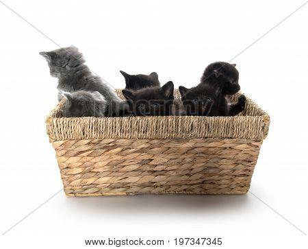 Cute Kittens In A Basket