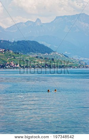 Lausanne Switzerland - August 26 2016: Women swimming in Lake Geneva and Lausanne coast on the background Switzerland.