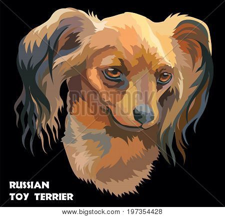 Colored Russian long-haired toy Terrier isolated vector portrait on black background