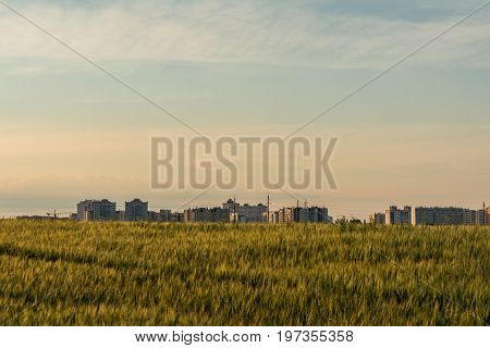 Barley Field Is Located In The Vicinity Of The City