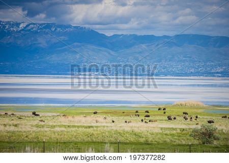 Roughed Utah landscape at Antelope Island Great Salt Lake natureal nature scenic travel tourism view