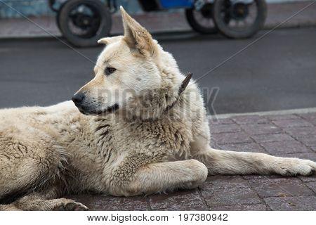 Portrait street dog on road  concept adoption background