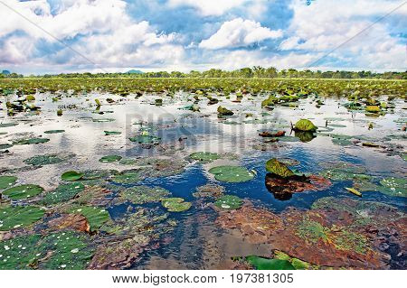Aquatic plants and Lotus flowers on the water surface In a lake in Sri Lanka