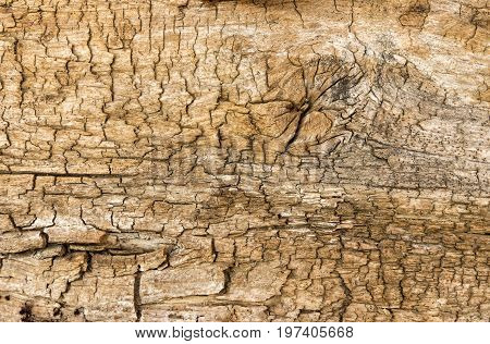 Natural background - old cracked wooden plank close-up up