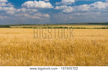 Summer landscape with blue cloudy sky and ripe wheat fields near Dnipro city central Ukraine
