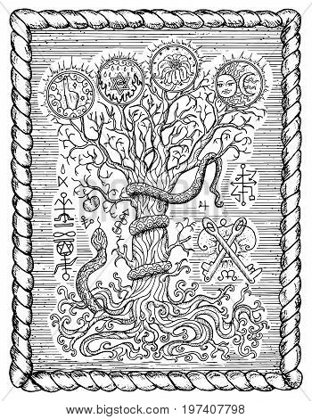 Black and white drawing with mystic and christian religious symbols as snake, tree of knowledge and forbidden fruit in frame. Occult and esoteric vector illustration, gothic engraved background
