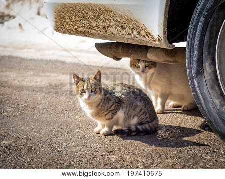 A cold winter day with snow two cats found shelter in the warmth under a car