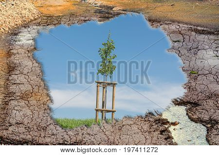 Dry ground in the middle of the image young tree on green meadow. Concept Climate change and climate disaster.