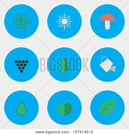 Elements Fruit, Punching Bag, Sheet And Other Synonyms Blossom, Bailer And Mushroom.  Vector Illustration Set Of Simple Gardening Icons.