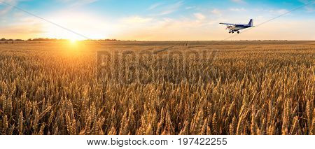 Airplane flying above the golden wheat field and blue sky with picturesque clouds. Beautiful summer landscape. Treatment watering and spraying of fields with pesticides. Crop protection from pests.