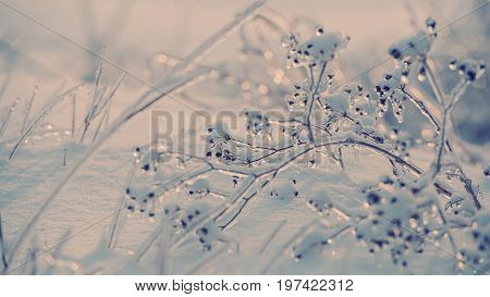 Dry plant covered with ice on a background of snow on a sunny day
