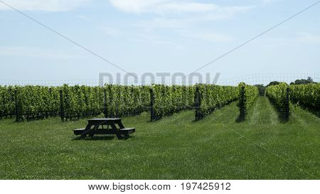 This image was taken at a North Fork vineyard on Long Island