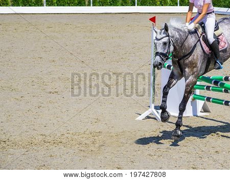 Beautiful girl on gray horse in jumping show, equestrian sports. Dappled gray horse and girl in pink shirt over a jump. Hot, shiny day. Copy space for your text.