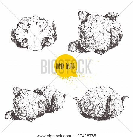Hand drawn sketch style cauliflowers set. Vector farm fresh food illustration isolated on white background.
