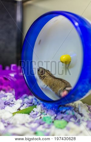 Hamster running on wheel with motion in cage