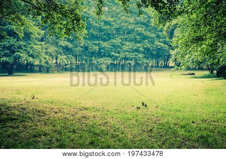 Green grass and trees. A glade in an urban park.