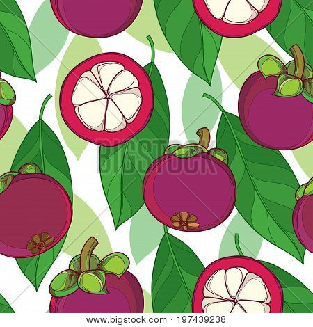 Vector seamless pattern with outline Purple Mangosteen or Garcinia mangosteen fruit and leaf on the white background. Fruit pattern with Asian tropical plant in contour style for exotic summer design.