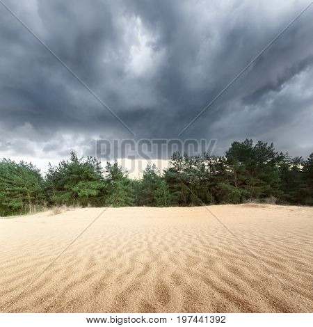 sand dunes in the woods / the storm clouds before sunset