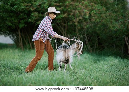 The Shepherd Boy throws the lasso on the goat. The boy catching a goat by roap. Goat roping