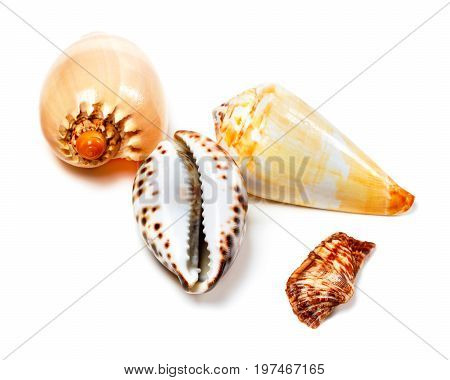 Various Of Exotic Seashells On White