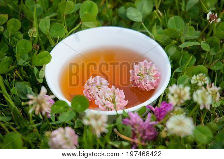 Cup with herbal tea from a clover on a natural background