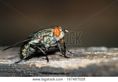 Macro shot of the insect flies with dark tone background.