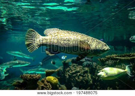Fish swims around a tropical reef with other fish in the background