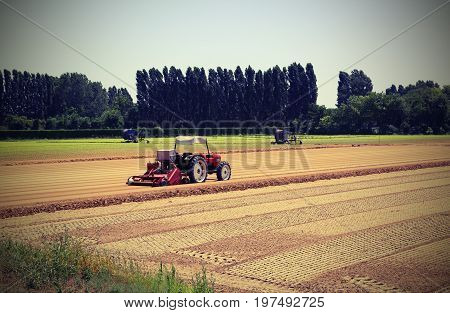 Field Cultivated With Lettuce And Tractor During Sowing Of Littl