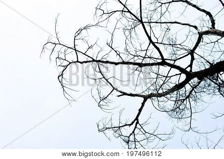 Dead Tree Sky Background