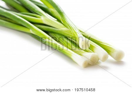bungle of green onion isolated on white background