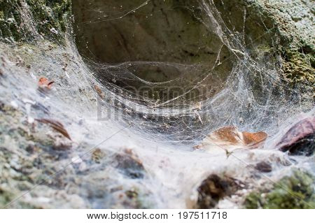 Funnel weaving spider deep in cave Thailand