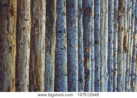 Aligned Tree Trunks