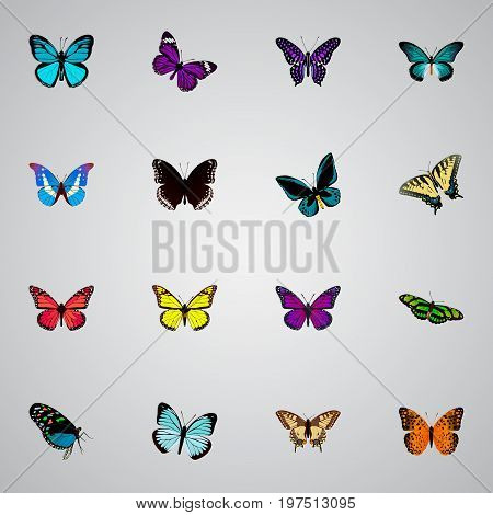 Realistic Polyommatus Icarus, Pipevine, Purple Monarch And Other Vector Elements