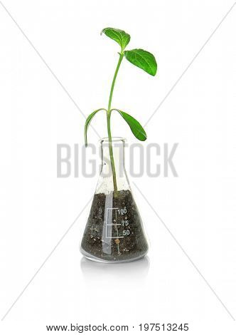 Plant in Erlenmeyer flask isolated on white