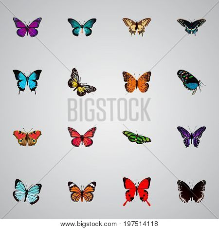 Realistic Polyommatus Icarus, Tiger Swallowtail, Purple Monarch And Other Vector Elements