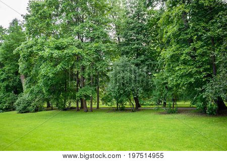 Green Park with trees and fresh grass. Nature background summer. The freshness and purity of the forest.