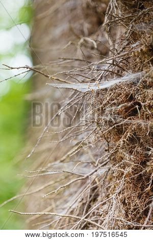 Closeup Of Cobweb On Moss Tree