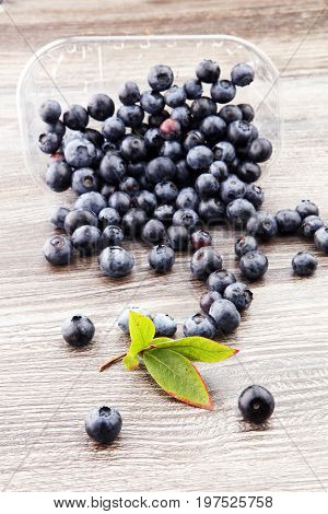 Freshly Picked Blueberries.juicy And Fresh Blueberries With Gree
