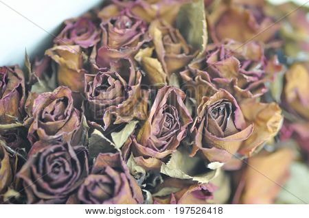 old roses or old bouquet of roses