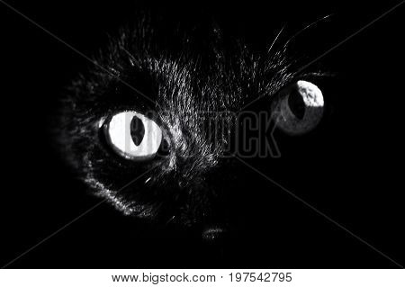 close up of a black cat's eyes surrounded by darkness staring at viewer. high contrast black and white image.