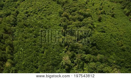 Many Trees View From Above