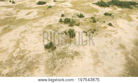 A Lot Of Sand And Trees