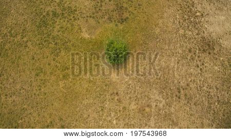 One Tree In The Field