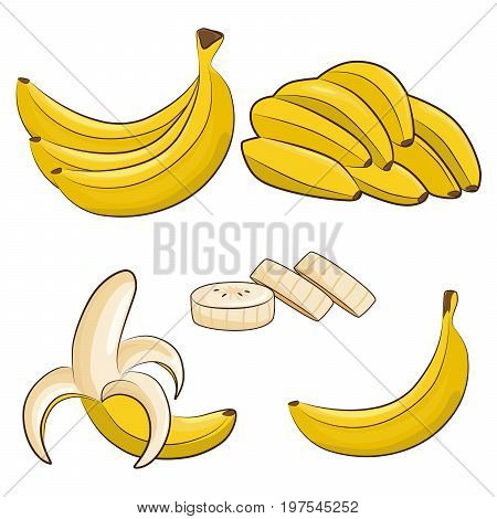 Vector fresh bananas. Peeled and sliced bananas collection of sketch style vector illustration isolated on white background.