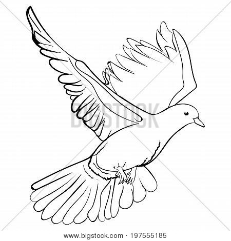 Free flying white dove sketch style vector illustration isolated on white background hand drawing of white dove pigeon flapping wings