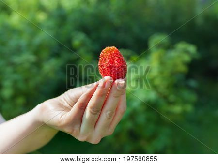 A beautiful large ripe strawberry. A large strawberry in an outstretched hand. The girl is holding a big red sweet berry.