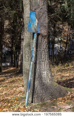 Ingrown Parking Sign In A Tree Trunk 2