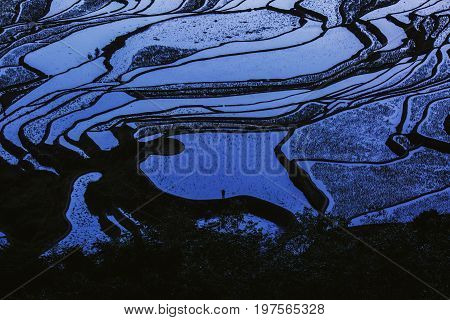 Lonely peasant under blue sunset light on rice terraces full of water, Yunnan in China